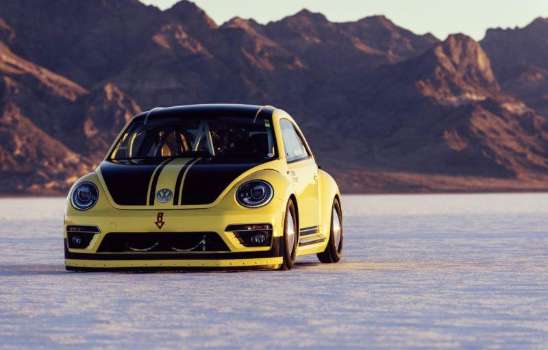 beetle-lsr-2-web