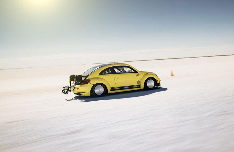 beetle-lsr-3-web