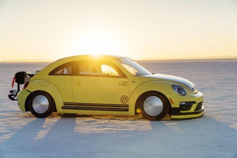 beetle-lsr-5-web