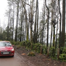 Hyundai Weekend Getaways: Bengaluru to Chikamaglur